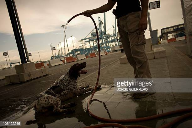 A police sniffer dog receives a shower after a Frontex coordinated joint operation which takes place in the ports of Algeciras Ceuta and Tarifa on...