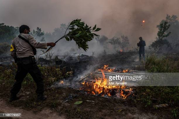A police using a branch to extinguish the fire on burned peatland and fields on September 14 2019 in the outskirts of Palangkaraya Central Kalimantan...