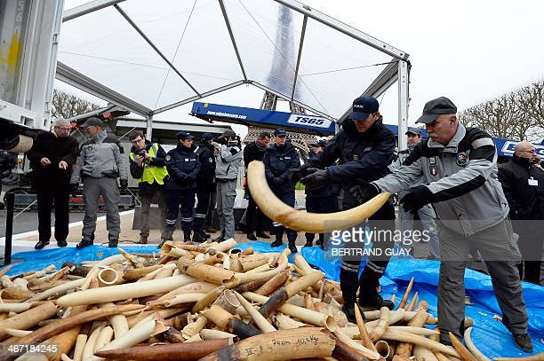 Policeman discharge a defense as three tonnes of illegal ivory are displayed on February 6 2014 in front of the Eiffel tower in Paris France fired...
