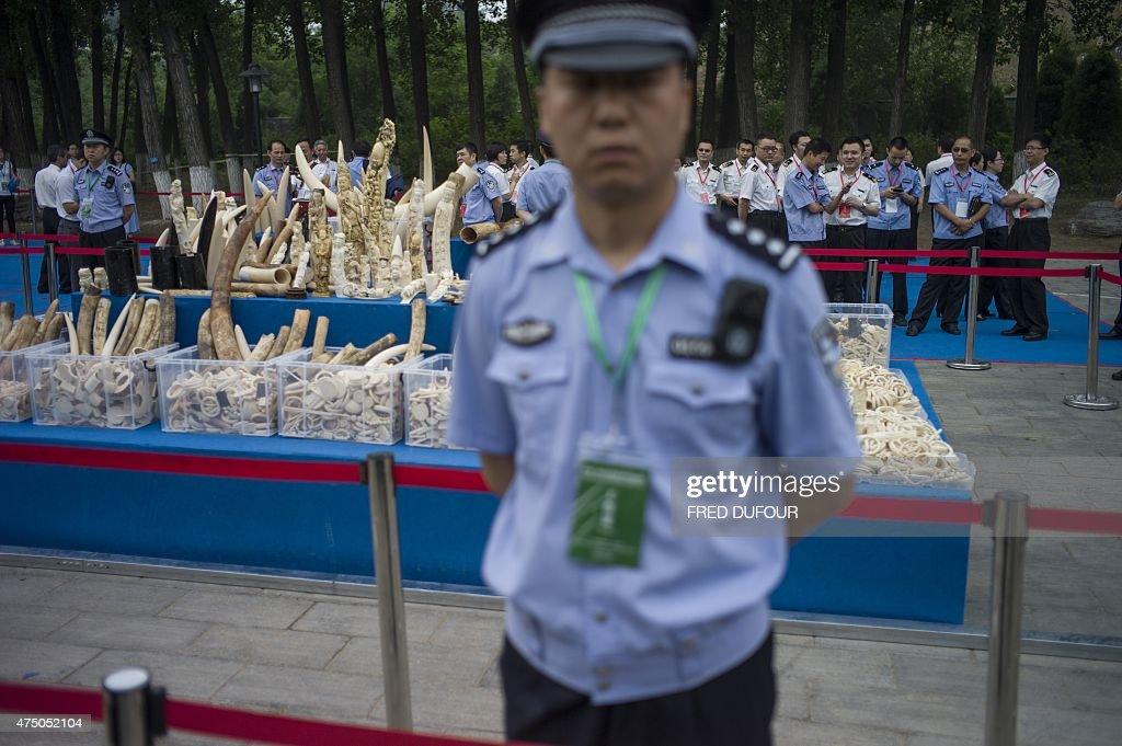 CHINA-CONSERVATION-WILDLIFE-IVORY : News Photo