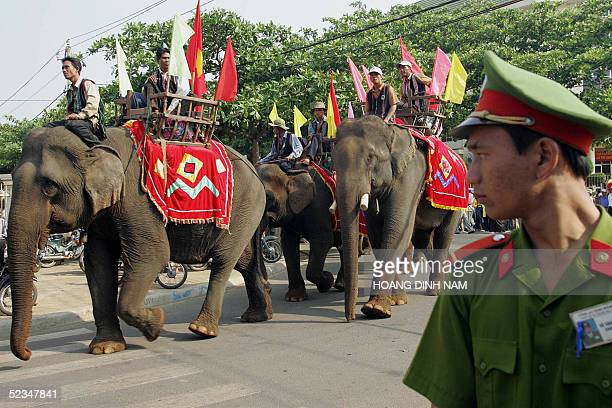 A policeman watches elephants guided by Ede hiltribe men parading in downtown of the central highland town of Buon Ma Thuot during an official...