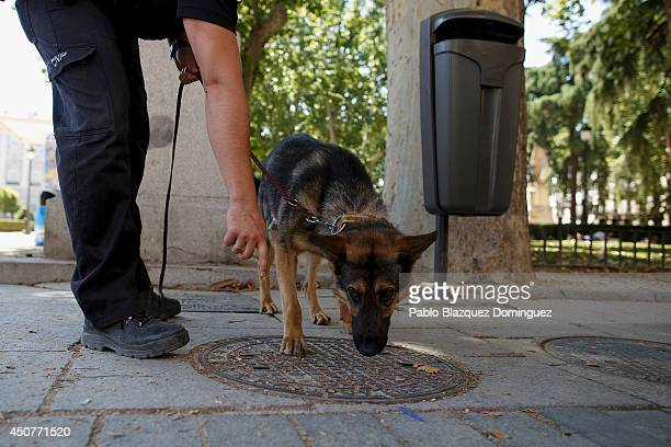 A policeman working with a police dog checks a manhole cover at Plaza de Oriente near the Royal Palace on June 17 2014 in Madrid Spain Prince Felipe...