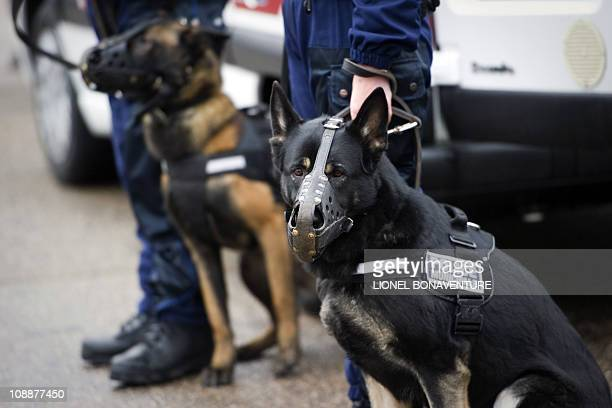 Policemen and their dogs are seen as they wait for french president Nicolas Sarkozy on February 03 in Orleans center France during a visit focused on...