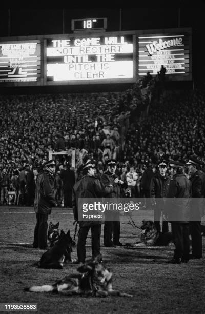 """Policemen with police dogs during the """"Luton Riot"""", which happened during Luton Town and Millwall FA Cup match at Kenilworth Road ground, Luton, UK,..."""