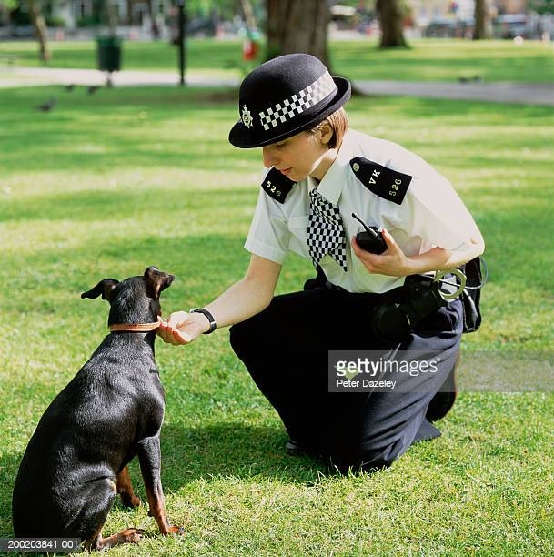 policewoman crouching to check dog's collar - collar stock pictures, royalty-free photos & images