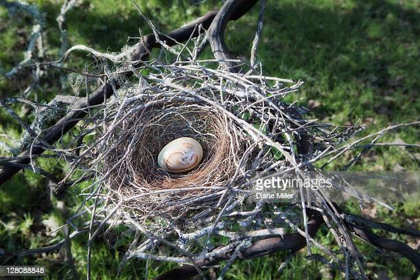 Polished stone egg in real bird's nest, in Manzanita tree