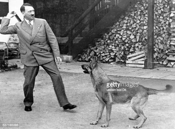 Politiker NSDAP D beim Spiel mit einem Schäferhund vor Haus Wachenfeld auf dem Obersalzberg bei Berchtesgaden