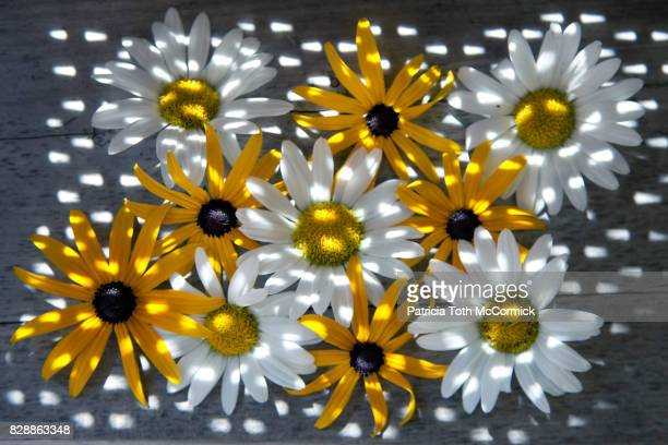 Polka Dotted Yellow and White Daisies