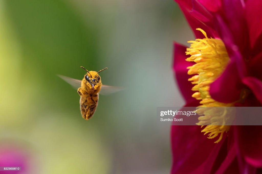 Pollen Monster : Stock Photo