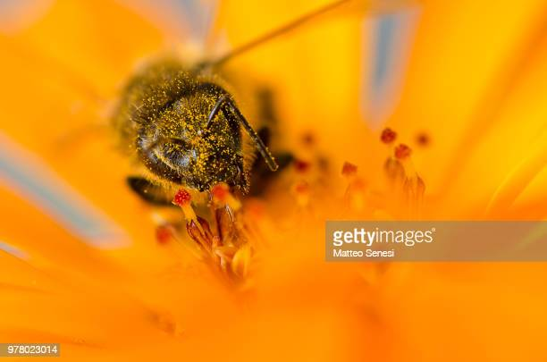 Pollinated