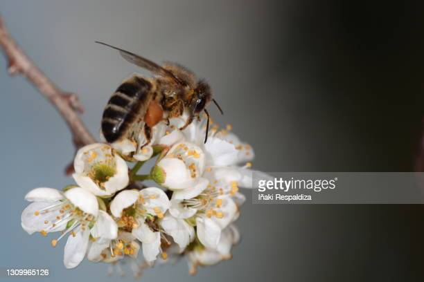 pollinating - iñaki respaldiza stock pictures, royalty-free photos & images