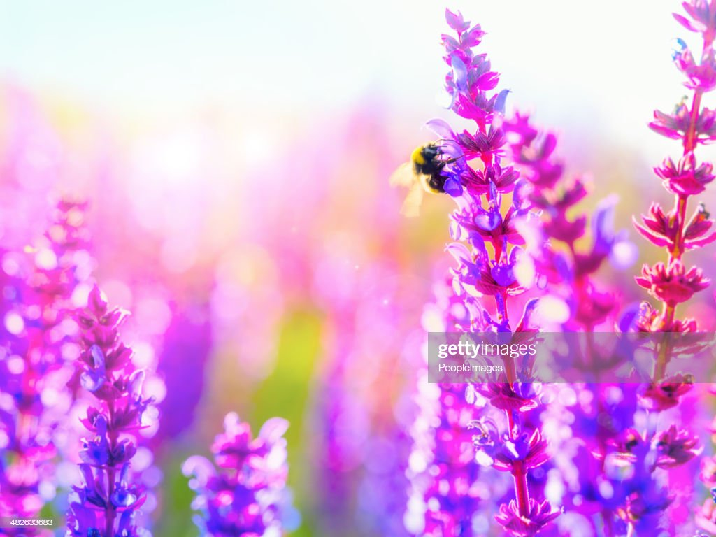 Pollination: Nature's miracle process : Stock Photo