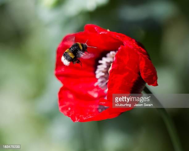 pollination - s0ulsurfing stockfoto's en -beelden