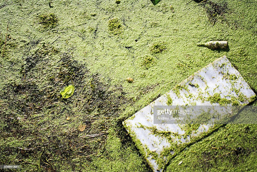 polluted water body : Stock Photo