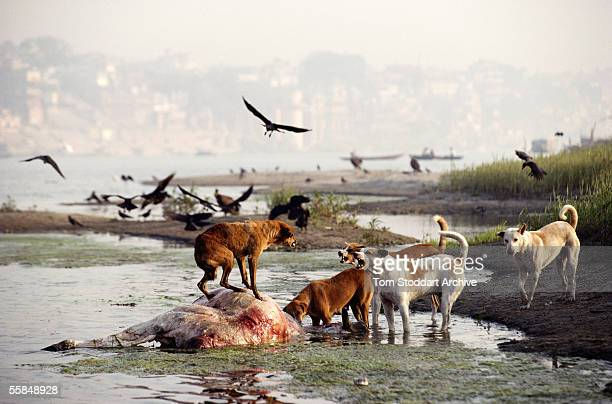 Pollution in the River Ganges at the Hindu Holy City of Varanasi