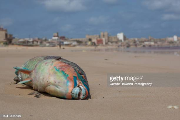 pollution on the beach, senegal - food contamination stock photos and pictures