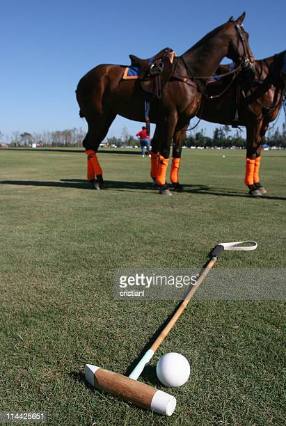 polo horses - polo stock pictures, royalty-free photos & images