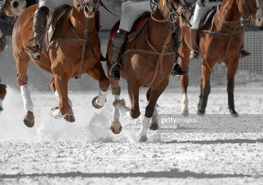 Polo horses running down the field : Stock Photo