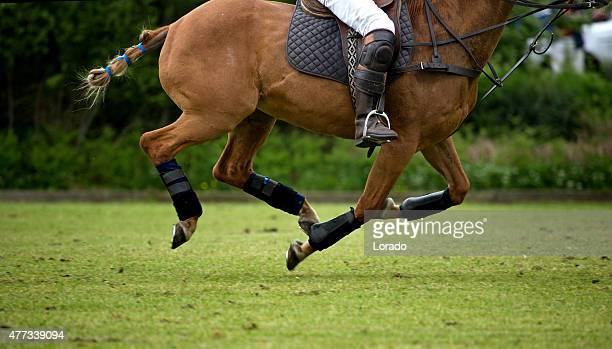 Polo player on horseback