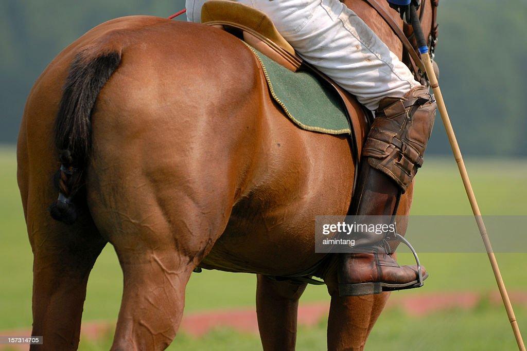 Polo Player Riding on Horse : Stock Photo