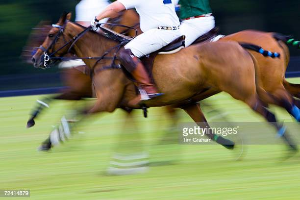 Polo ponies and riders at Guards Polo Club in Windsor United Kingdom