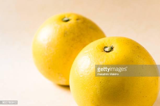 Pomelo, Citrus maxima