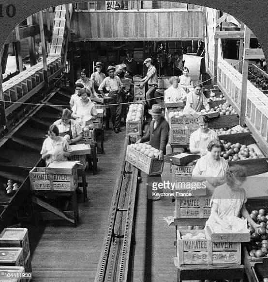 Pomelo packing factory in Florida around 1900