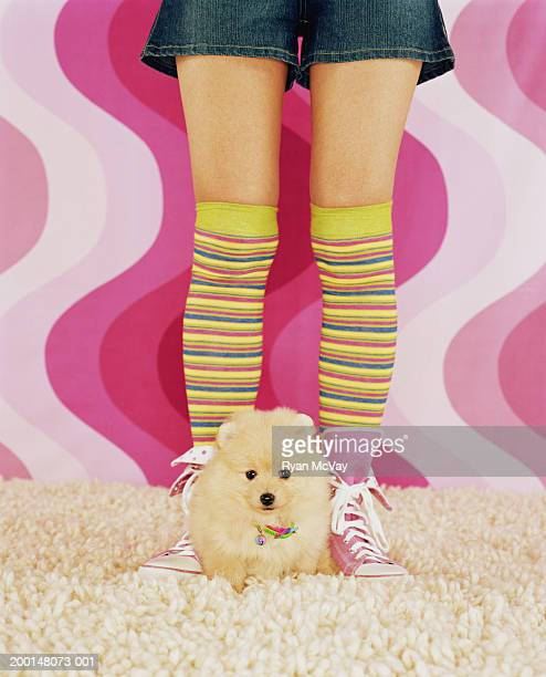 pomeranian dog sitting in between woman's feet - japanese spitz stock pictures, royalty-free photos & images