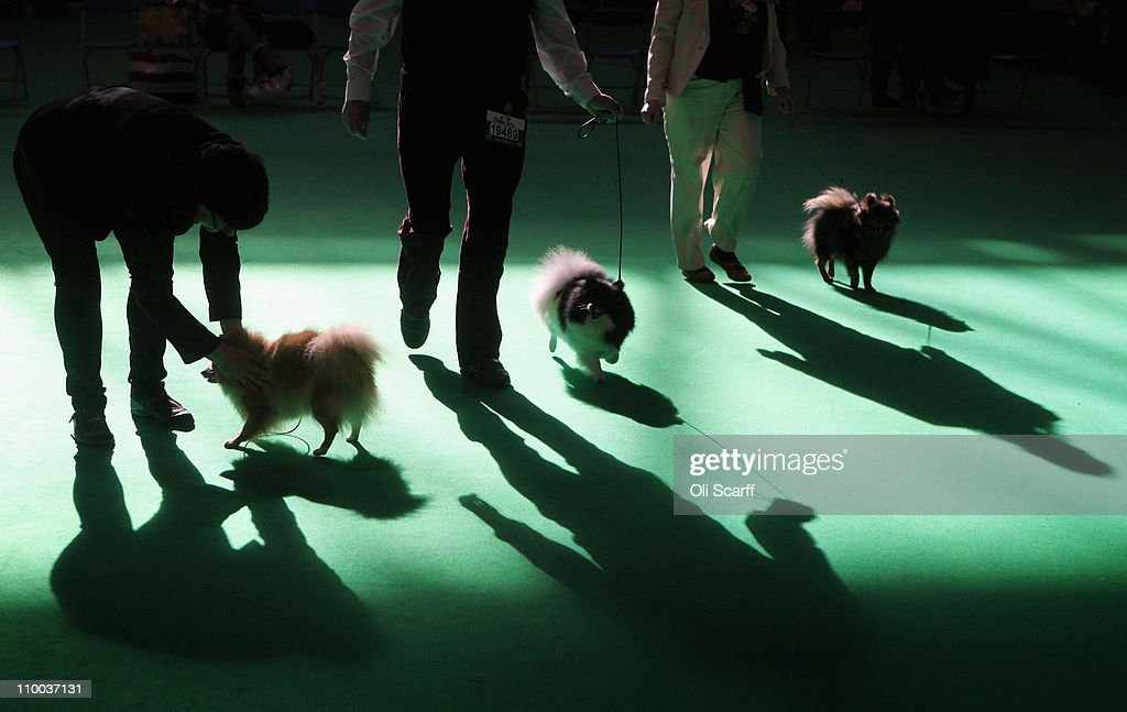 Best In Show Announced At Crufts : News Photo