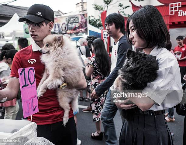 Pomeranian dogs Bangkok