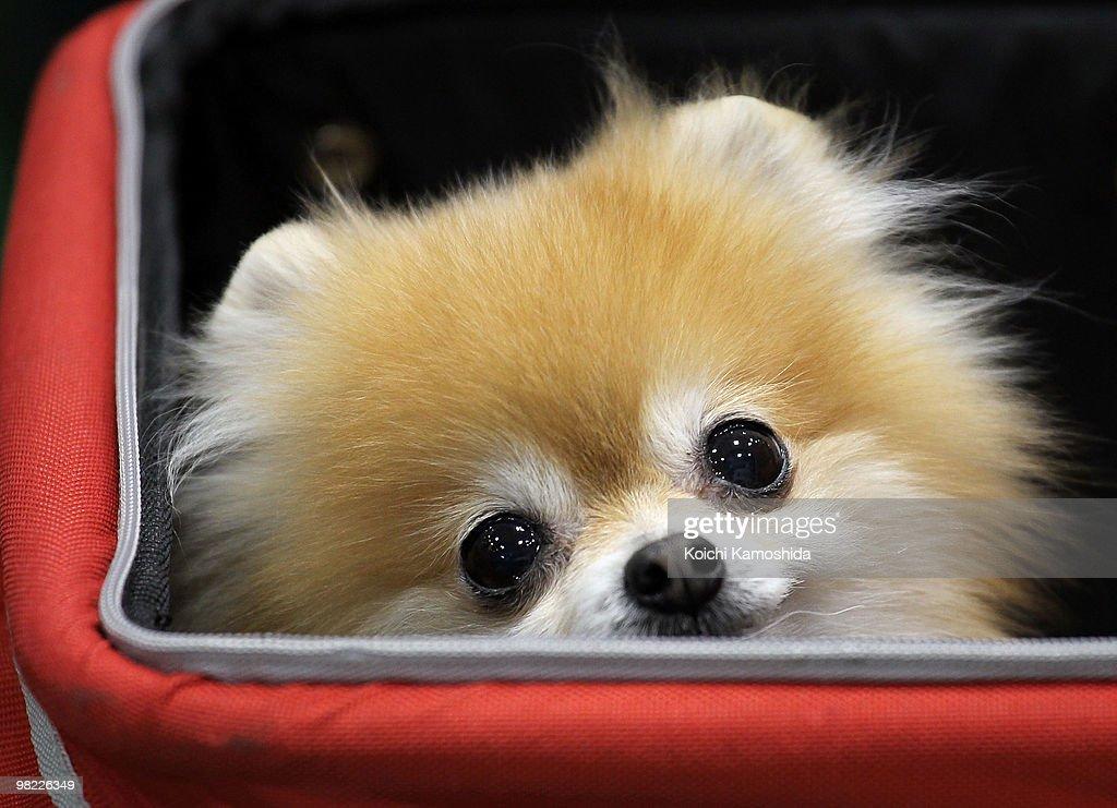 Asian International Dog Show : News Photo