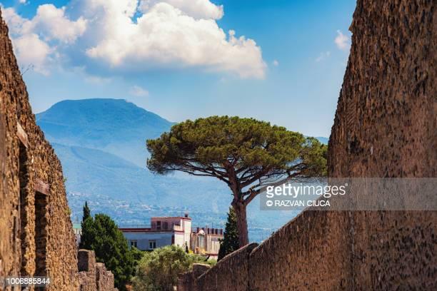 pompeii - pompeii stock photos and pictures