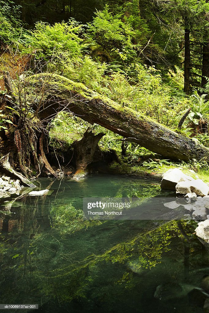 Pond and moss covered log in forest : Stockfoto