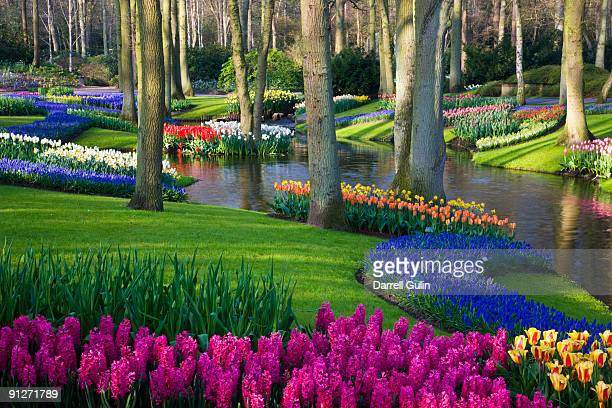 pond and spring flowering blubs keukenhof gardens - keukenhof gardens stock pictures, royalty-free photos & images