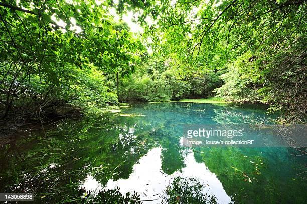 pond and trees - 山形県 ストックフォトと画像