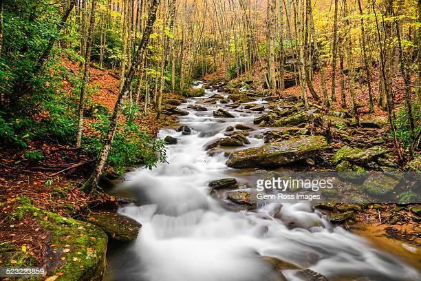 pond creek beech mountain nc - heather brooke ストックフォトと画像