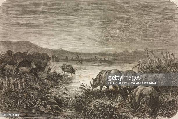 A pond frequented by animals at twilight drawing by Gustave Dore from a sketch by Andersson from Adventures and hunting of the traveller Carl Johan...