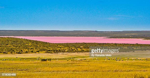 Pond in pink on the inside of Patagonia.
