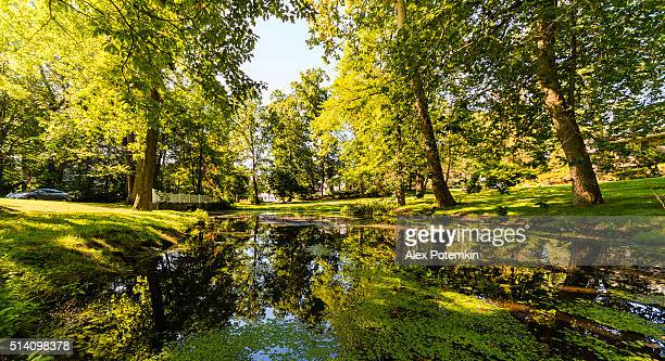 pond in resential community in scarsdale, westchester county, usa - westchester county stock photos and pictures