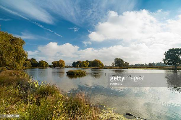 Pond in the Bushy Park, Richmond-upon-Thames, England