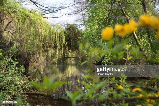 Pond in Tiergarten park in spring, Berlin, Germany