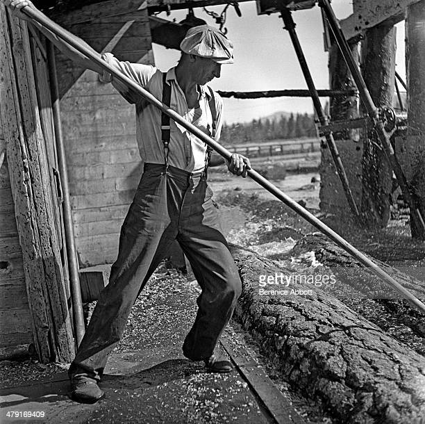 A pond man hard at work United States circa 1950 Abbott took two series of logging photographs the first in the High Sierra Mountains in 1943 and the...