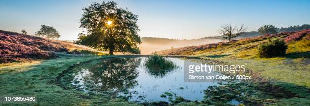 pond of sunbeams, posbank netherlands - posbank ストックフォトと画像