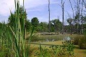 Pond of water in the rural Wetlands