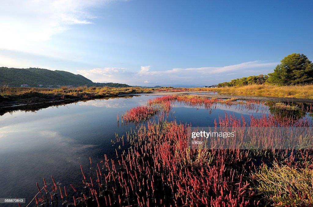 Pond : Stock Photo