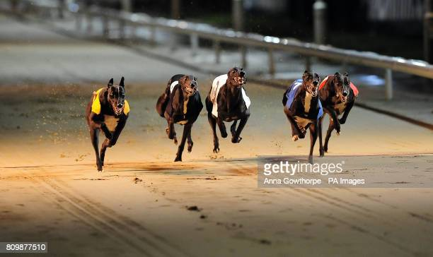 Pond Shefelia on its way to victory in the Williamhillcom Angel of the North Cup Final during the WilliamHillcom All England Festival at Newcastle...