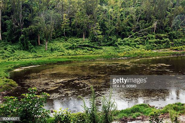 Pond surrounded by dense vegetation Spittal Pond nature reserve Great Sound of Bermuda British Overseas Territory