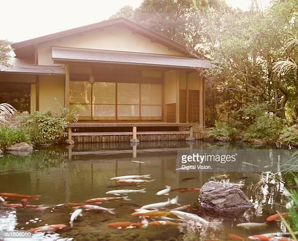 Pond With Koi Carps and Typical Japanese House