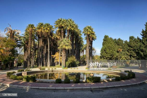 pond with palm trees at the background in public park,izmir. - emreturanphoto stock pictures, royalty-free photos & images