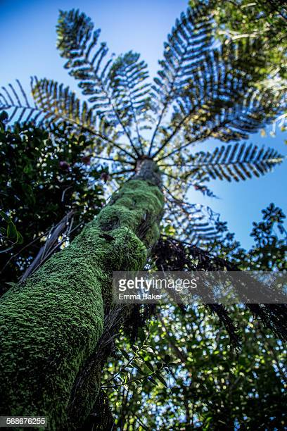 nz ponga canopy - emma baker stock pictures, royalty-free photos & images